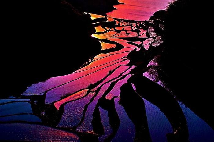 Невероятные рисовые поля, снятые на закате.