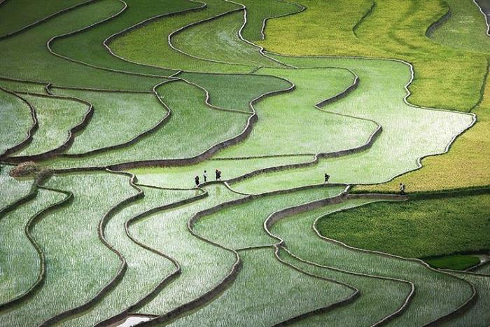 Плантации риса в Северном Вьетнаме.