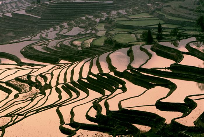 Чарующие рисовые террасы в китайской провинция Юньнань.