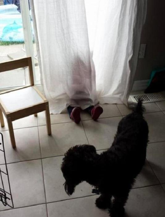 Малыш, спрятавшийся за шторой.