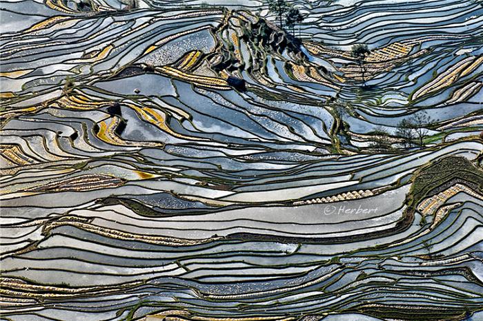 Серебристое небо в отражение рисовых полей.