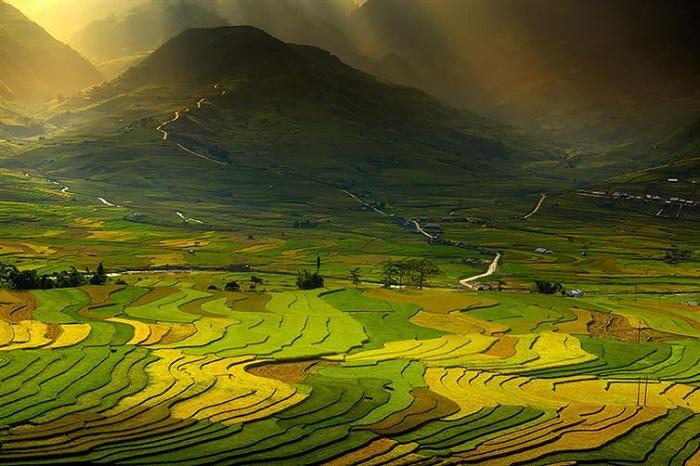 Разноцветные рисовые поля.