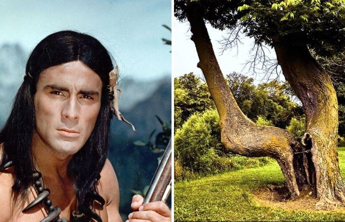 Американский индеец и путеводное дерево.