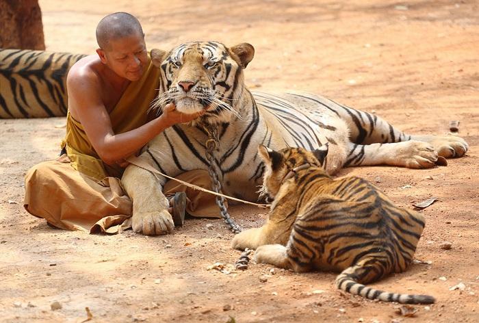 Снимки фотографов Athit Perawongmetha и Sakchai Lalit.