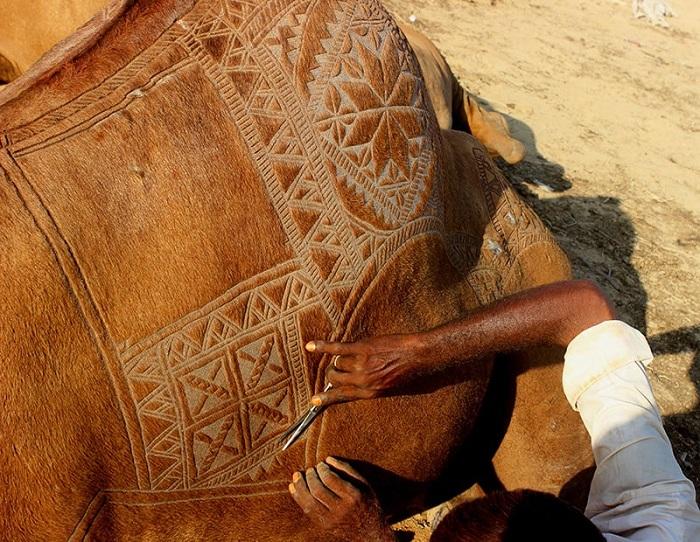 Украшенные верблюды стоят на 100-120 долларов дороже.