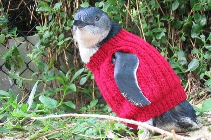 Одежка для пингвина.