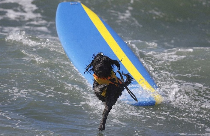Во время катания многие собаки исполняли акробатические номера.