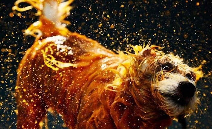 Canismo – арт-проект с участием собак.