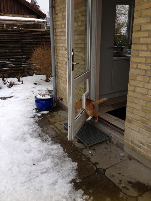 Несмотря на открытую дверь, котик вылазит через свой проход.