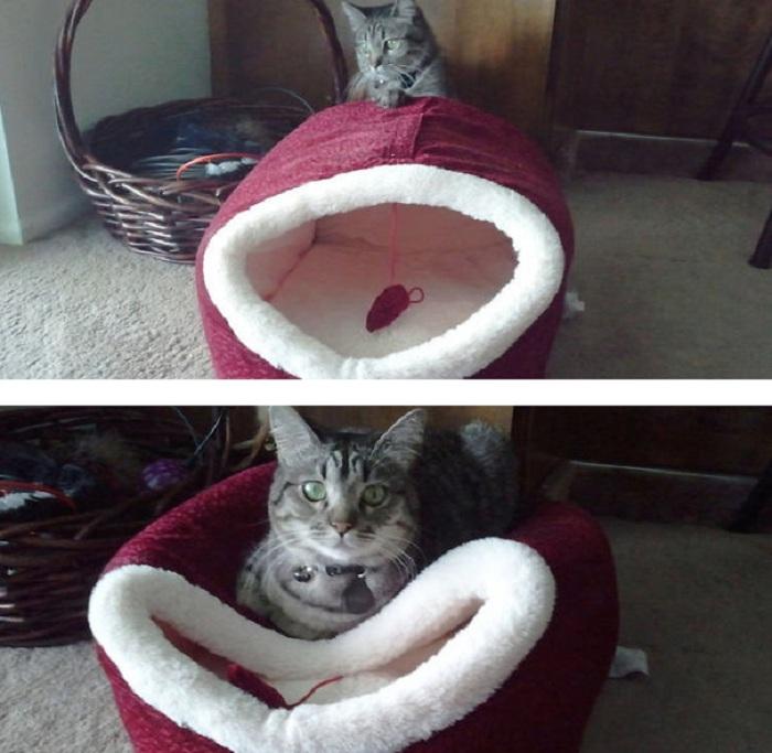 Вместо того, чтобы забраться в мягкую корзинку котик садится на нее сверху.