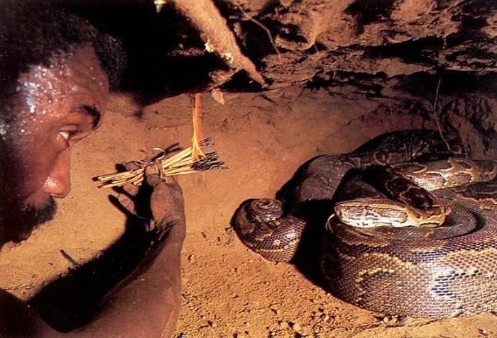 У змеи инфракрасное зрение, она реагирует на тепло.