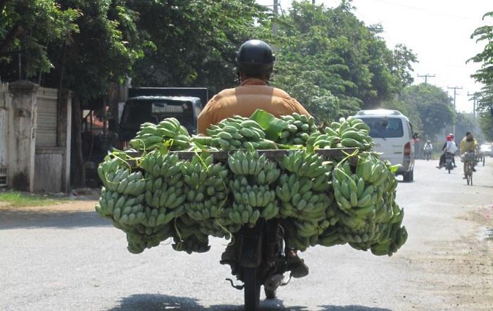 Камбоджа. Огромные связки бананов на маленьком мопеде.