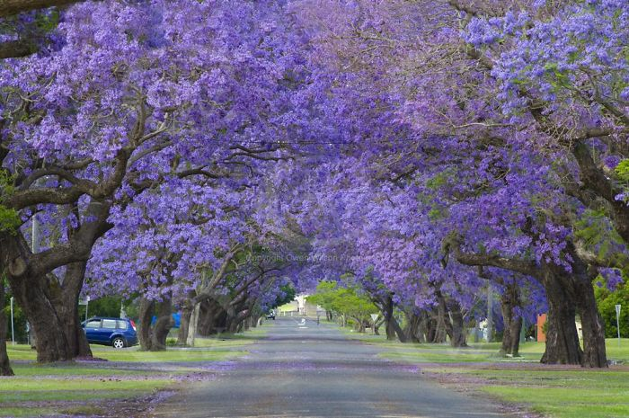 Grafton, Australia.