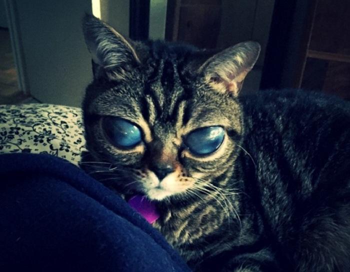 Кошка Матильда -звезда Instagram.
