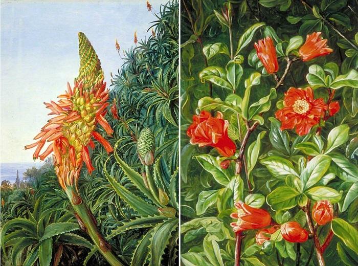 Цветы алоэ и граната означали горечь и тщеславие. | Фото: fiveminutehistory.com.