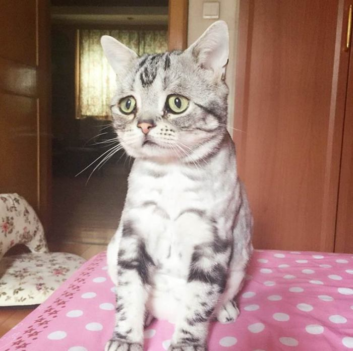 Котик с самыми грустными глазками в мире.