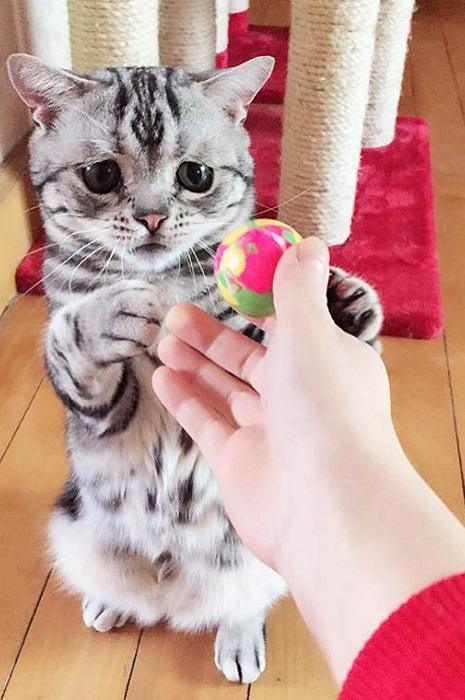 Кот породы табби с печальными глазками.