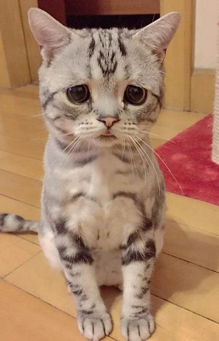 «Печальный» кот - звезда интернета.