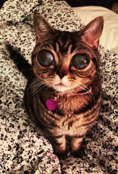 Кошка с «космическими» глазами.