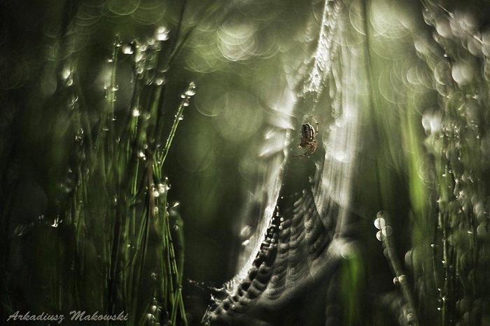 Снимок польского фотографа-самоучки.