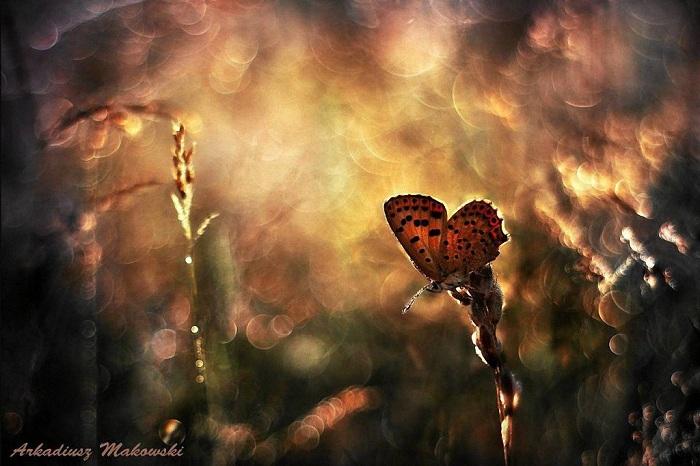 Макрофотография бабочки на зеленом лугу.