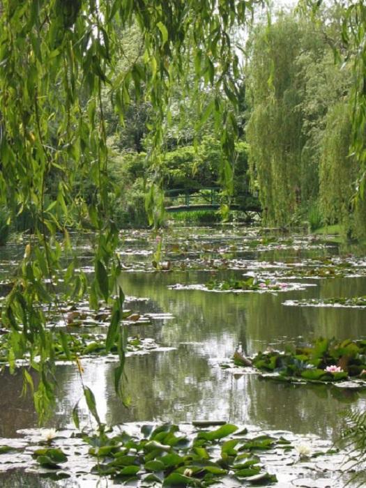 Пруд с лилиями. | Фото: thevintagenews.com.