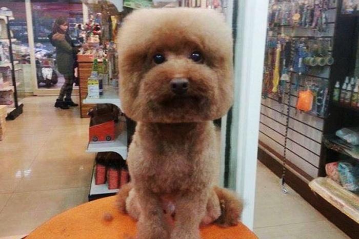 Собачка с квадратной головой.