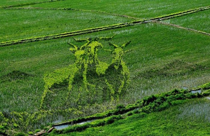 Рисовое поле с 3D-картинкой.