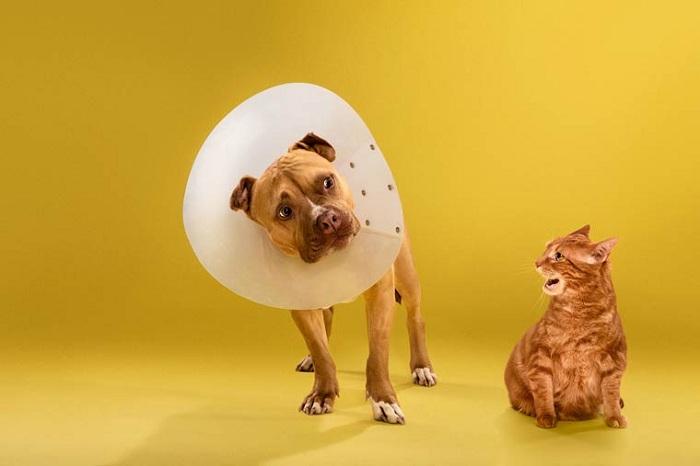 Time Out - серия снимков собак с пластиковыми ошейниками.
