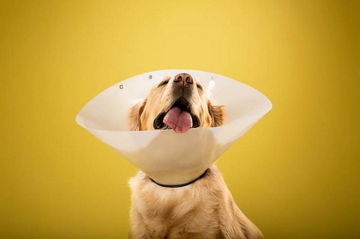Трогательная фотосессия собак в конусах позора.