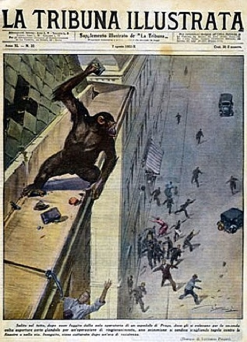 Саркастическая иллюстрация с обезьяной, не согласной быть оперированной. | Фото: softmixer.com.