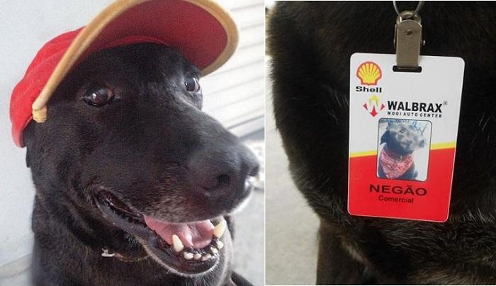 Собака, которая «трудится» вместе со своей хозяйкой на автозаправке.