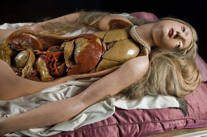 Анатомическая Венера - наглядное пособие по анатомии конца XVIII века.