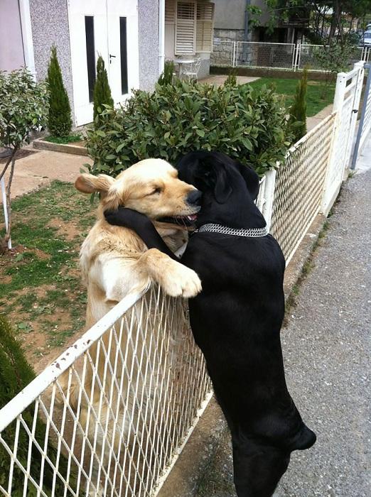 Собаки тянутся друг к другу.