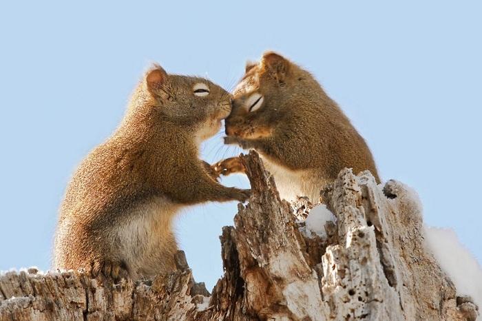 Белки шепчут друг другу слова любви.