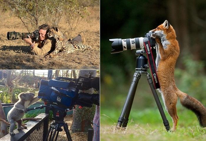 Животные-фотографы.