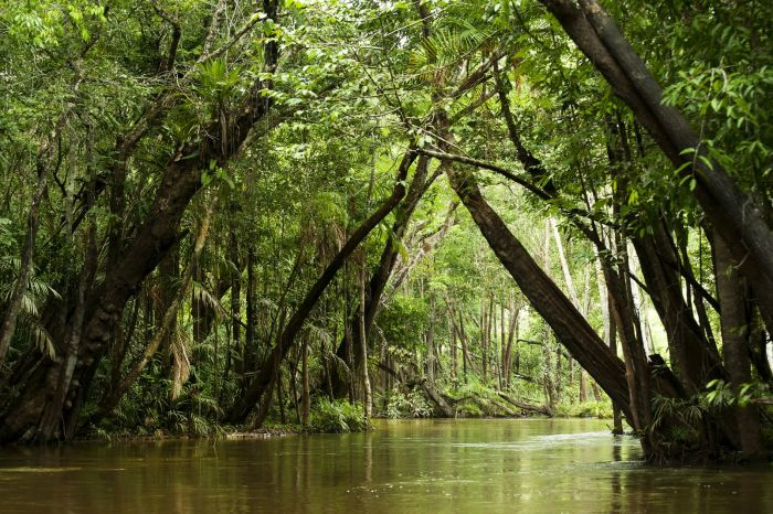 Тропический лес, который окружал каторгу во Французской Гвиане. | Фото: easyvoyage.com.
