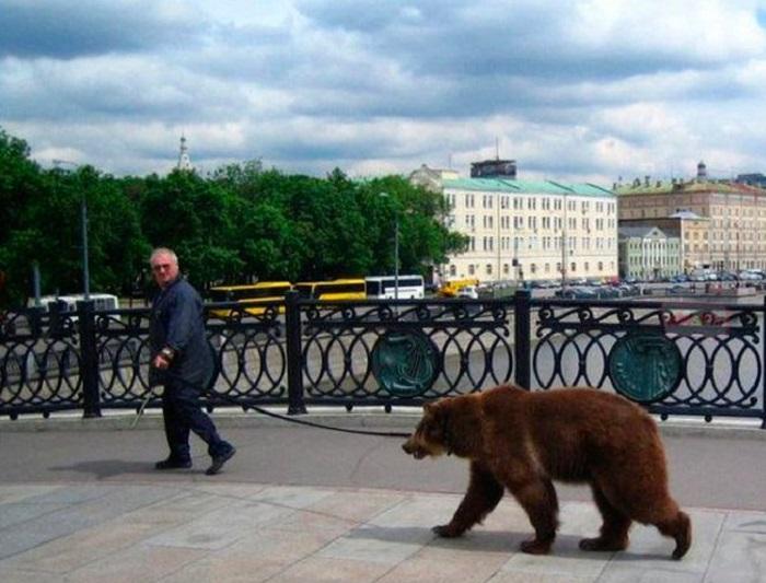 Прогулка с медведем по городским улицам. | Фото: cs541604.vk.me.