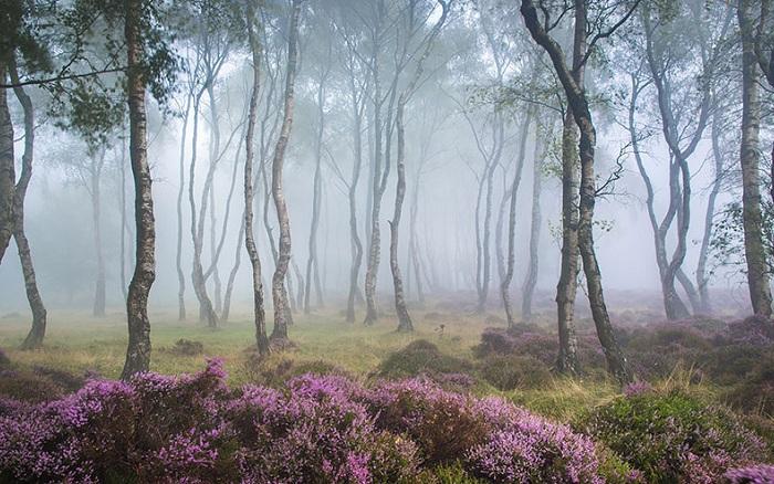 Stanton Moor Peak District (Британия).