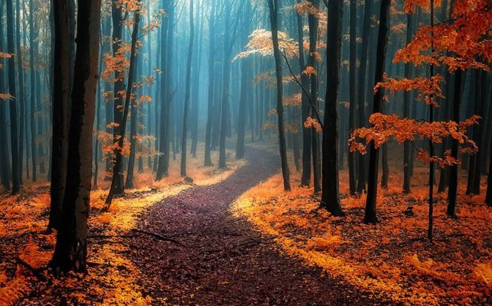 Осенний лес в Карпатских горах.