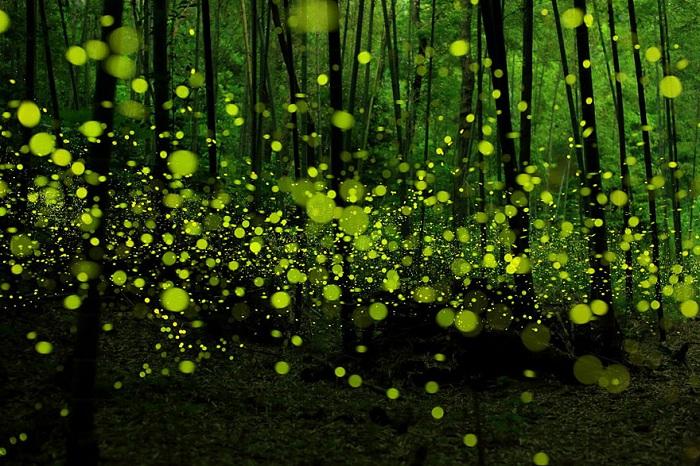 Мистический лес в Nagoya.