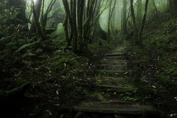 Таинственная тропа в лесу.