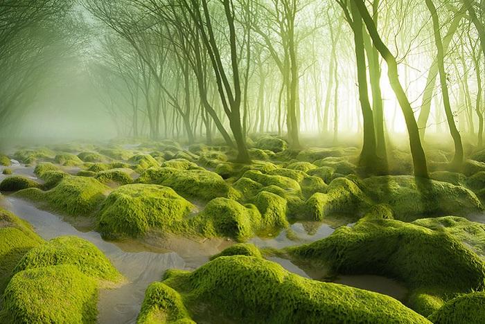 Красивый болотистый пейзаж.