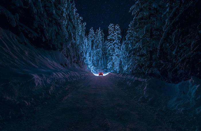 Фотография зимнего леса в Болгарии.