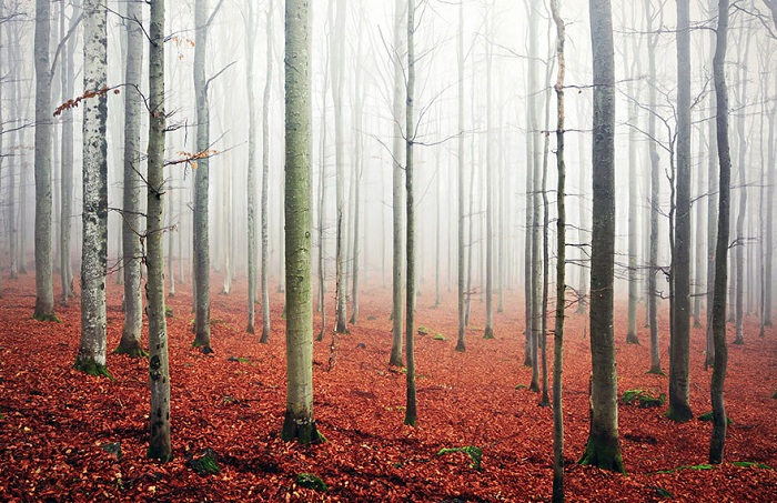 Bavaria forest.