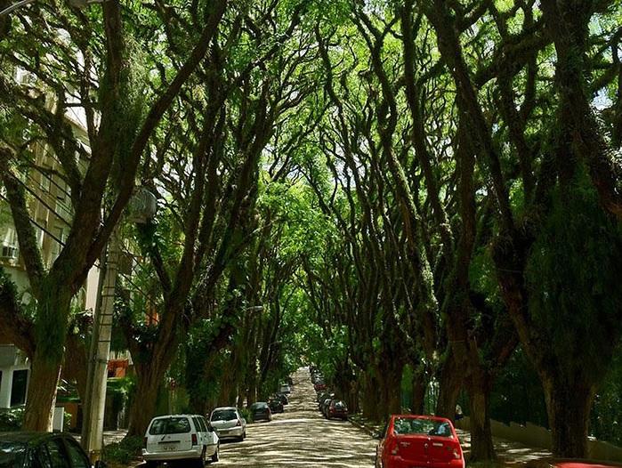 Зеленая улица в Порту-Алегрию