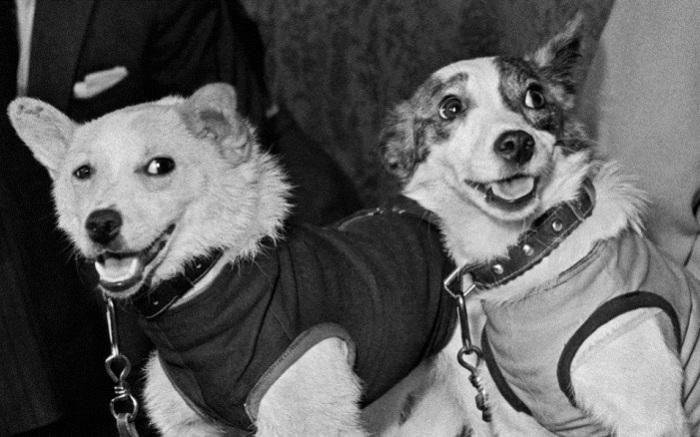 Белка и Стрелка - самые известные собаки Советского Союза. | Фото: arms-expo.ru.