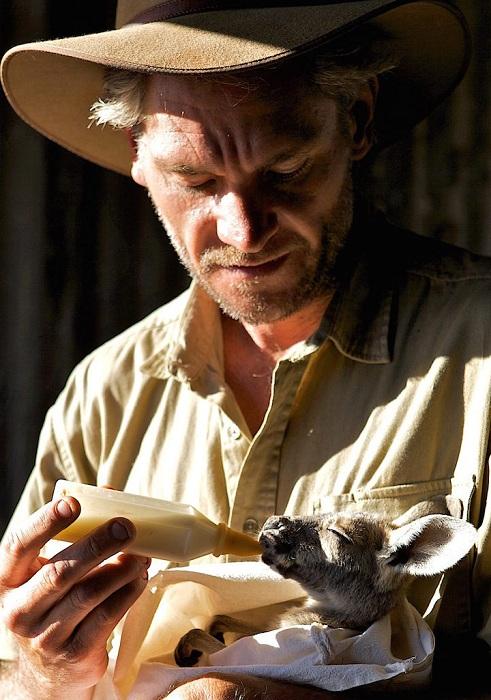Chris Barnes выкармливает детеныша кенгуру из соски.