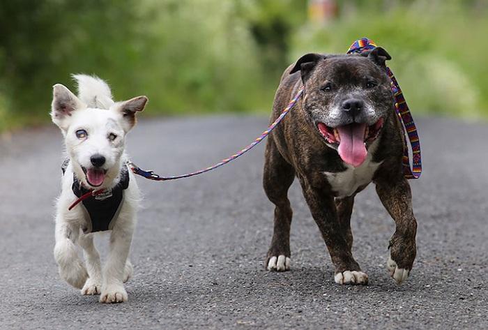 Настоящая дружба между собаками.