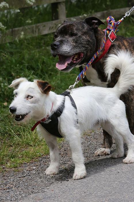 Собаки дружат уже 10 лет.